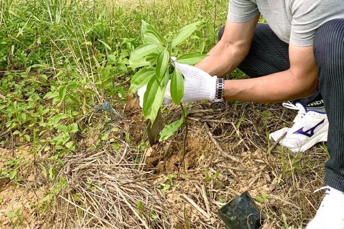 からぎの植樹