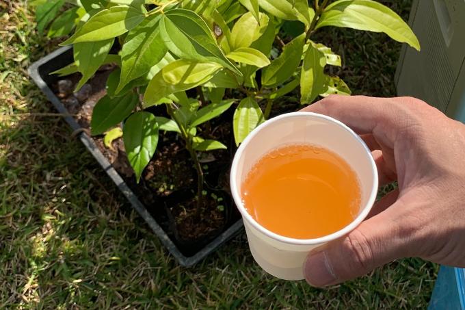 からぎの木から作られるからぎ茶